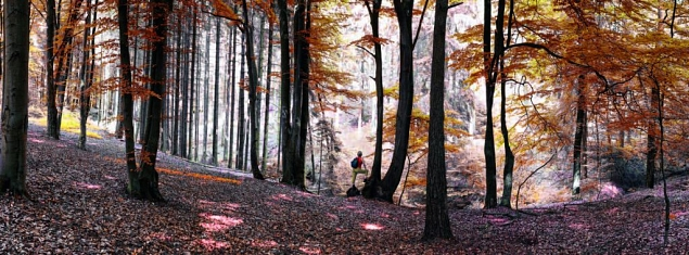 November © Stadtmarketing Georgsmarienhütte e.V.